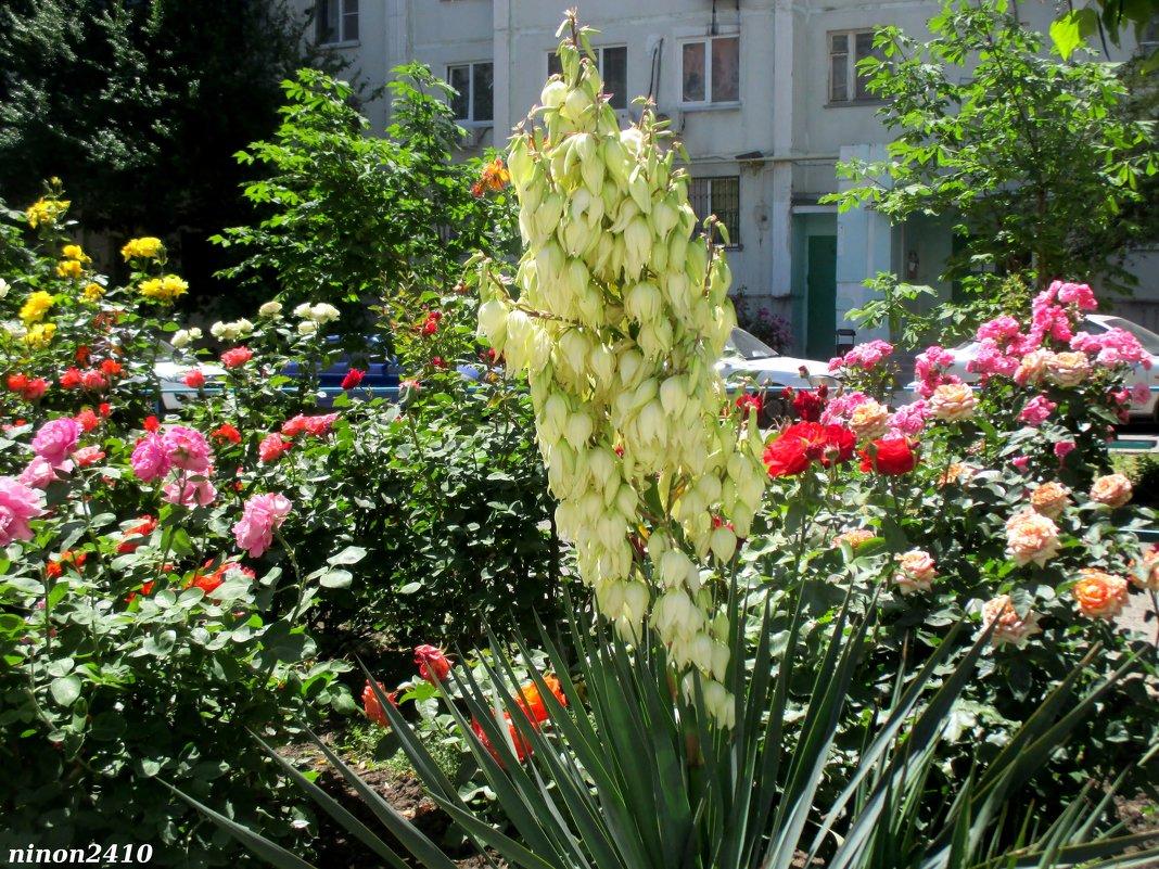 Цветники в ростовском дворе - Нина Бутко