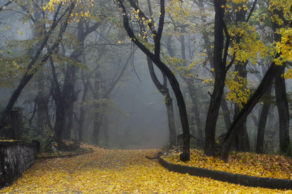 На ковре из желтых листьев........... - Юрий Цыплятников