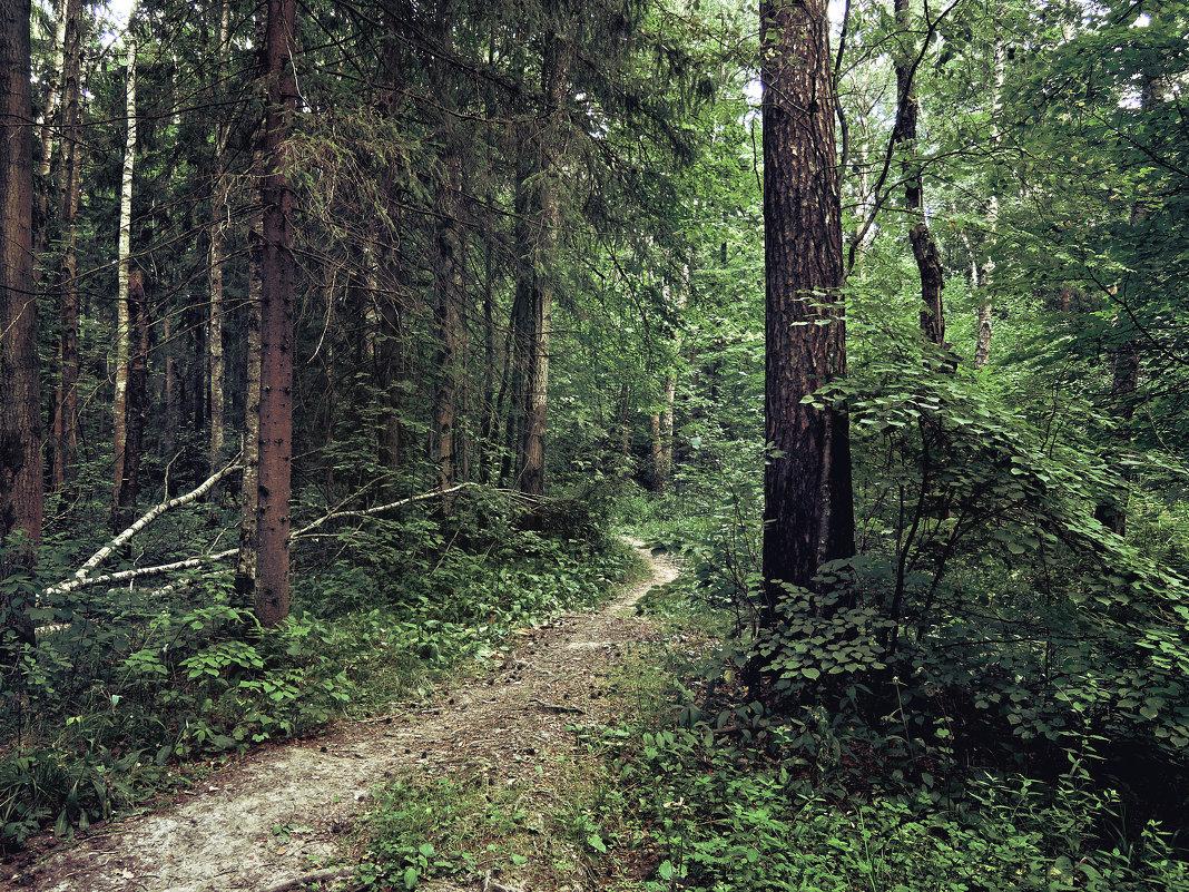 В подмосковном лесу - Денис Масленников