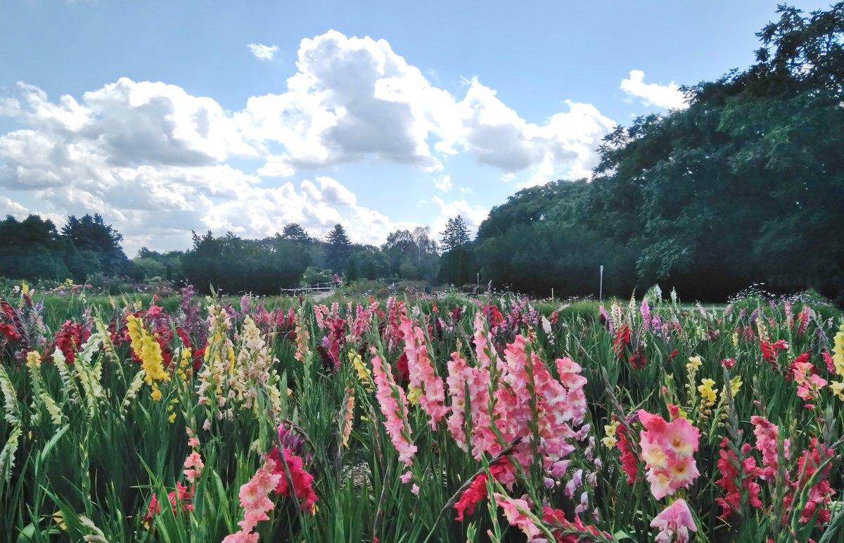 Царство гладиолусов, ботанический сад г. Минск - Tamara *