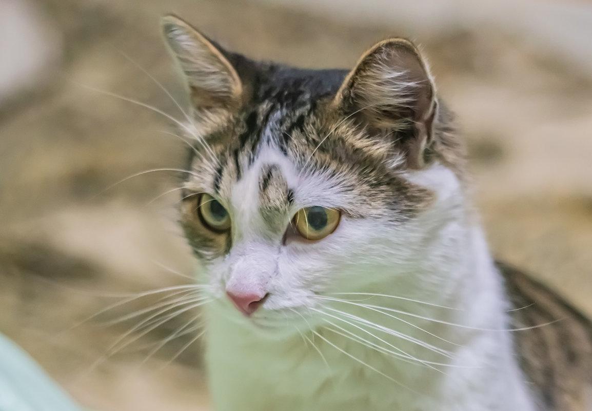 Есть ли у кошек ми-ми-мимика? - Игорь Герман