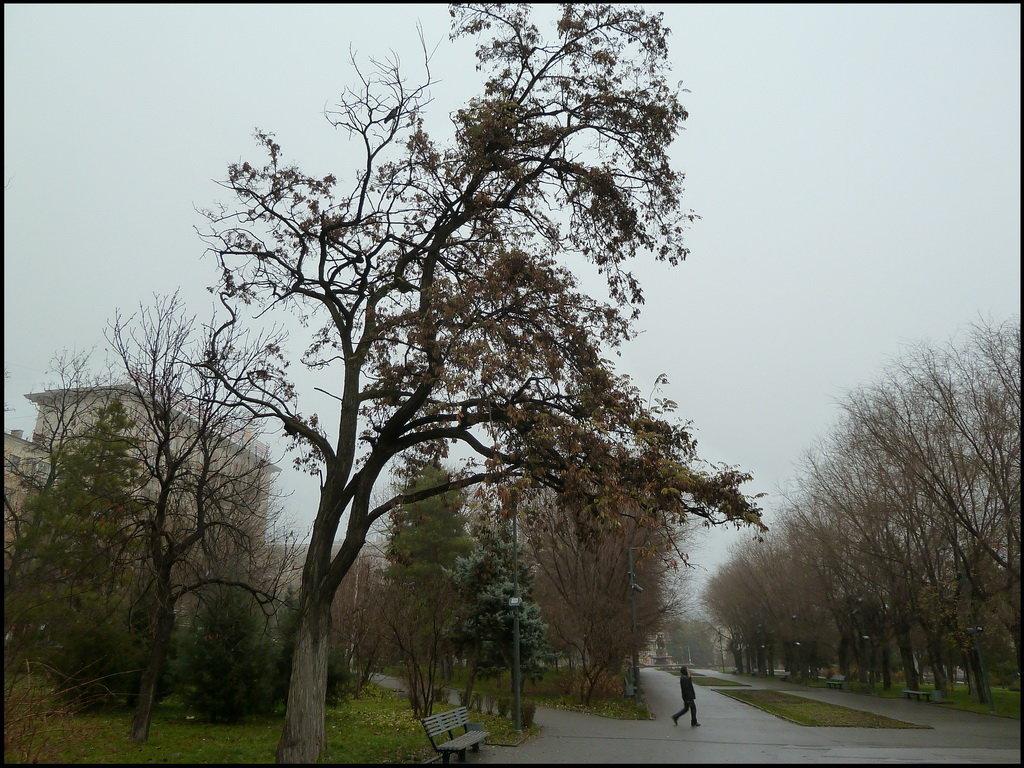 Городской парк ранним утром - Юрий ГУКОВЪ