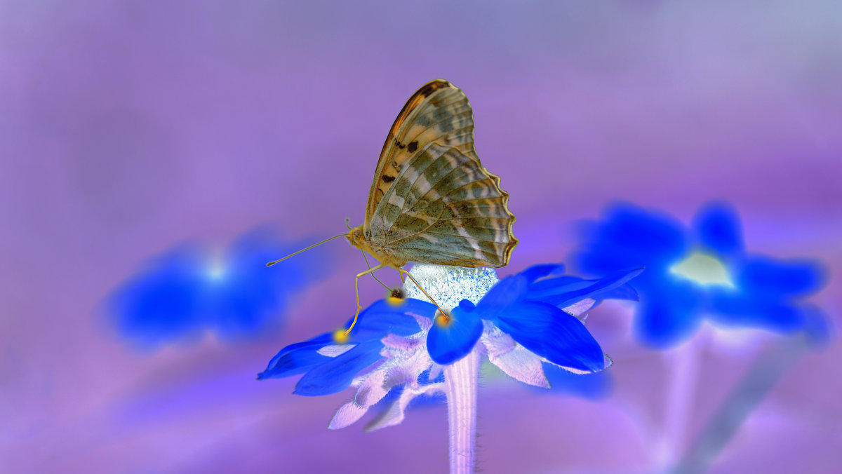 бабочка в новом свете - Mc!! .....
