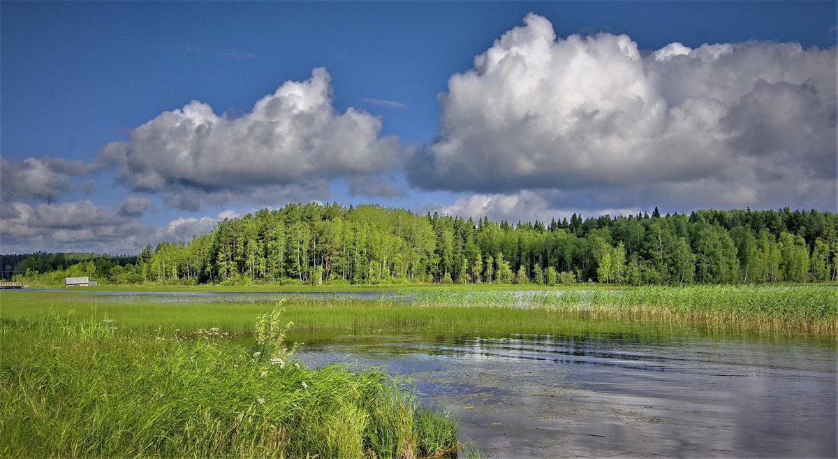 Летний день на Ковжском озере - Валерий Талашов