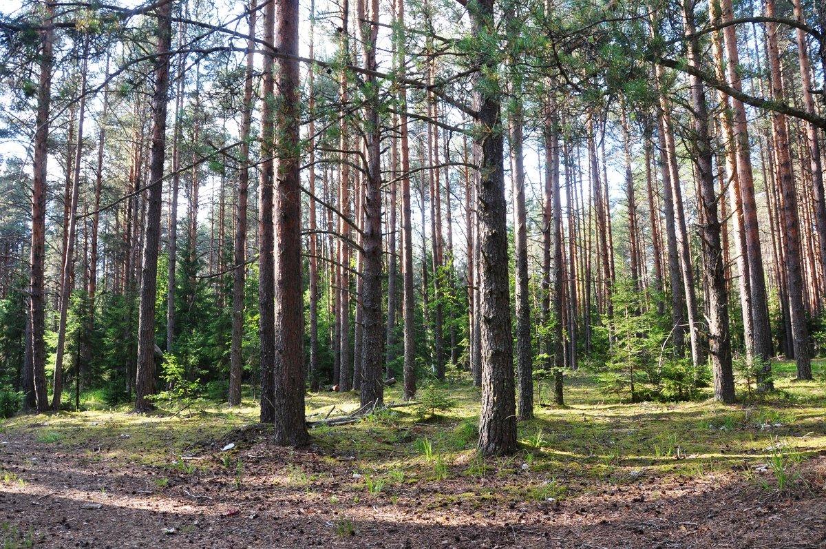 В лесу - Ольга Осовская