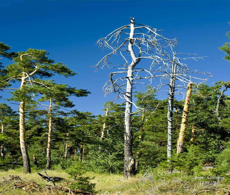 В лесу летом. - Анатолий