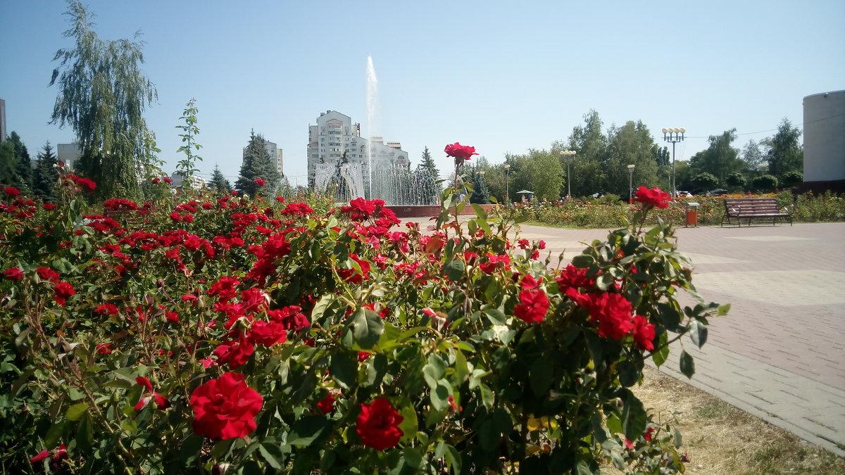 Розы - Serg