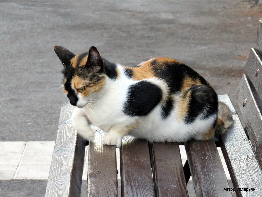 Кошка. - Валерьян Запорожченко