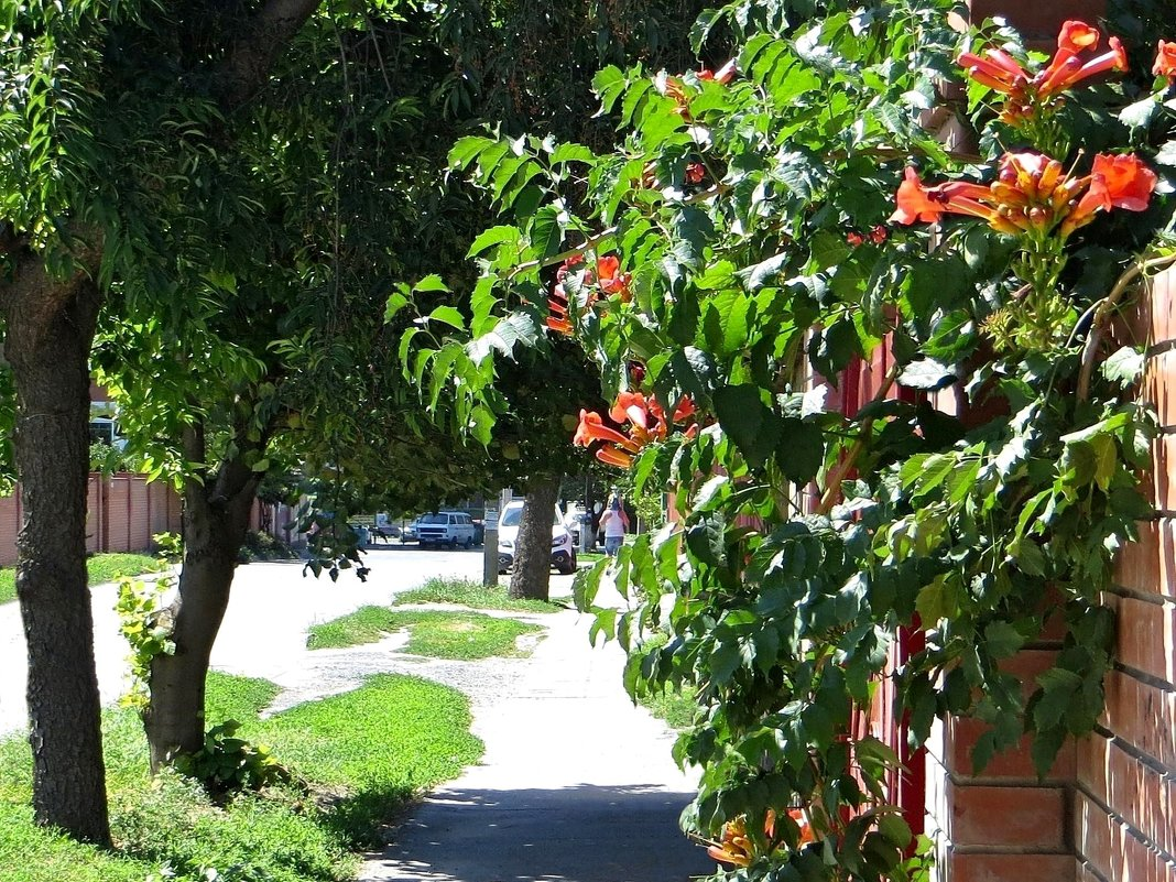 Август на дворе, осень на пороге, яростное солнце стало чуть добрей... - Татьяна Смоляниченко