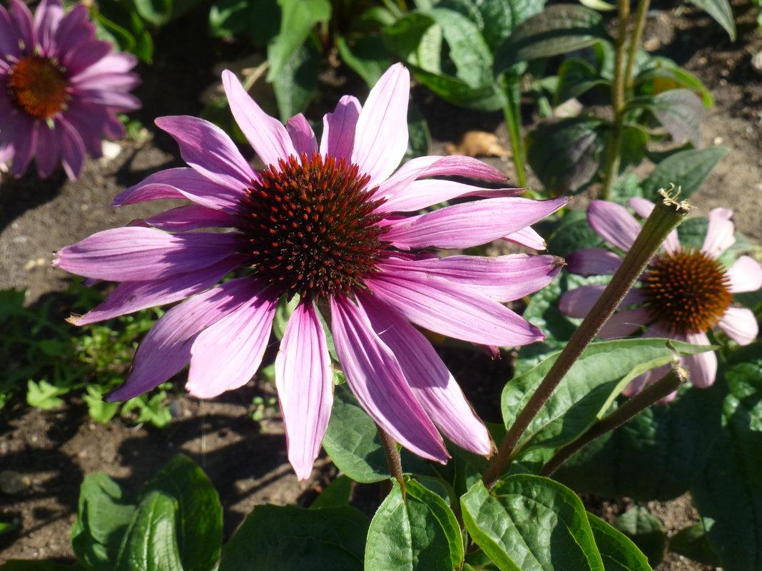 Цветы в сентябре - Наиля