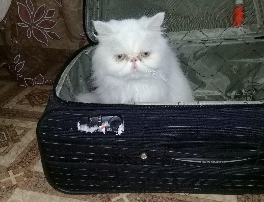 - А я все равно поеду с Вами! - Чария Зоя