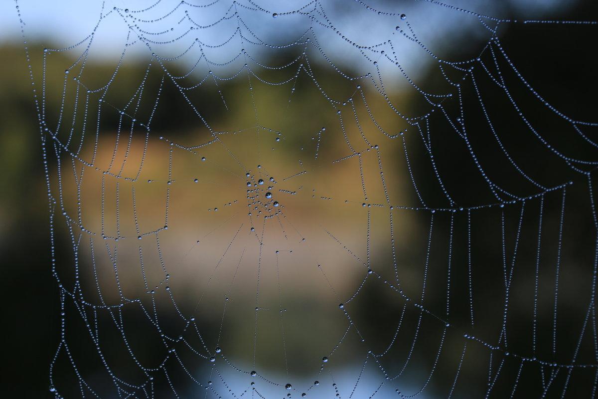 Осенняя паутинка - Татьяна Панчешная