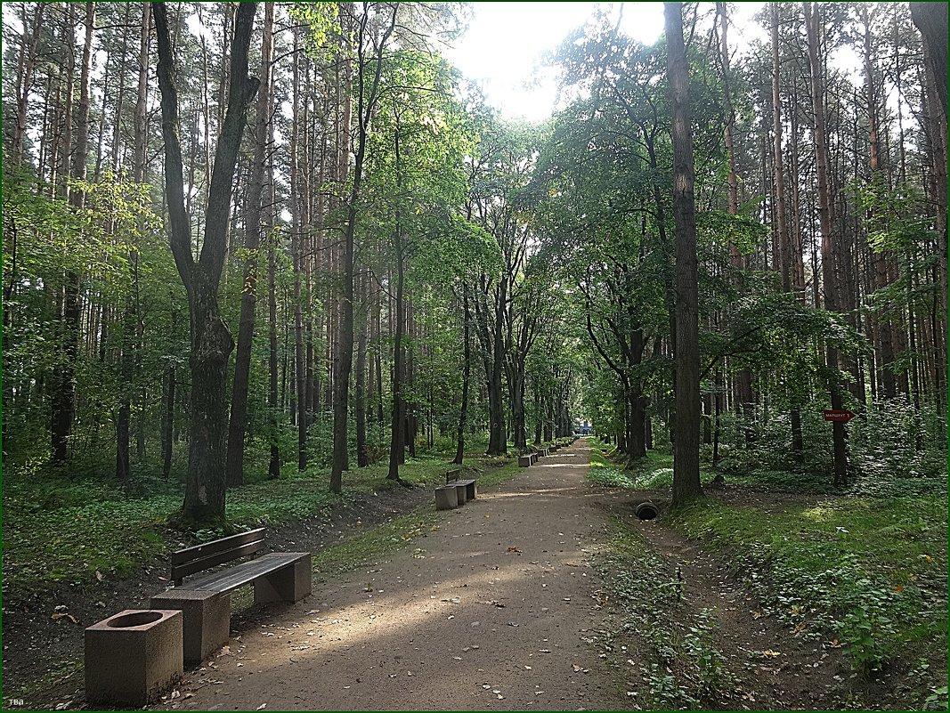 Оздоровительна парковая зона центра В.А.Алмазова - Вера