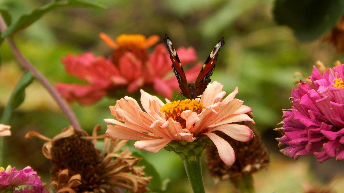 цветочные крылья - Alisa Koteva