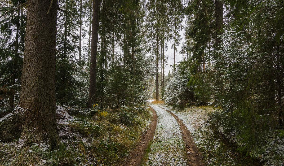 Дорога через лес - Валентин Котляров