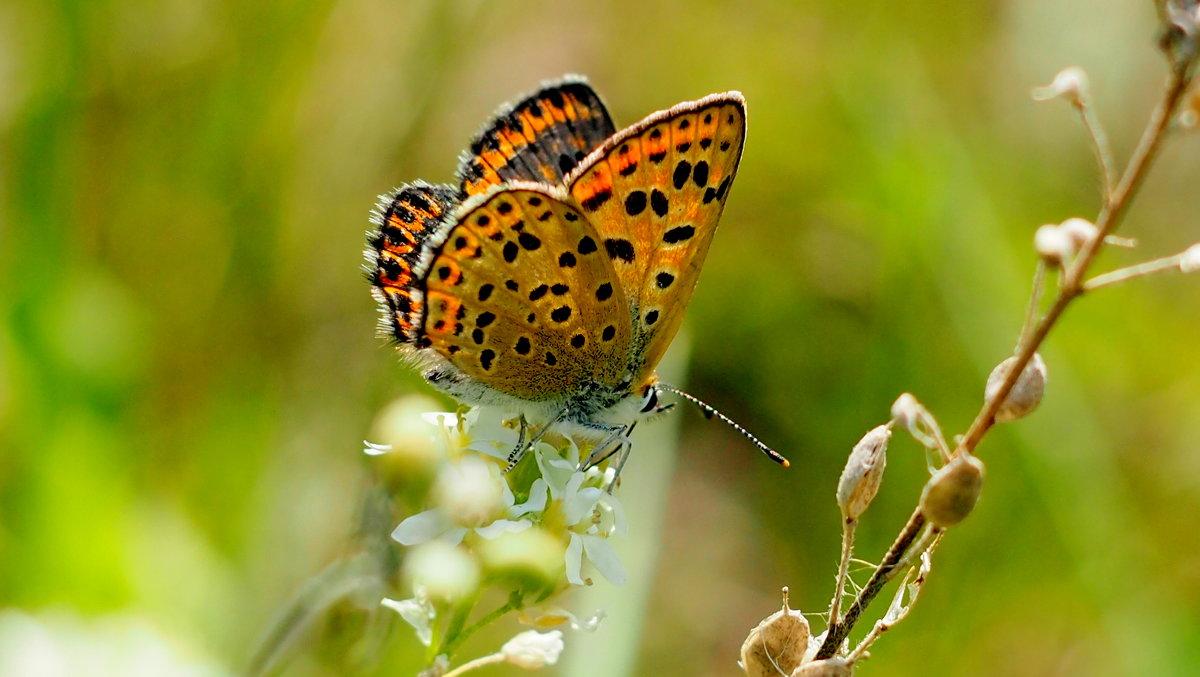 про рыжих бабочек 5 - Александр Прокудин