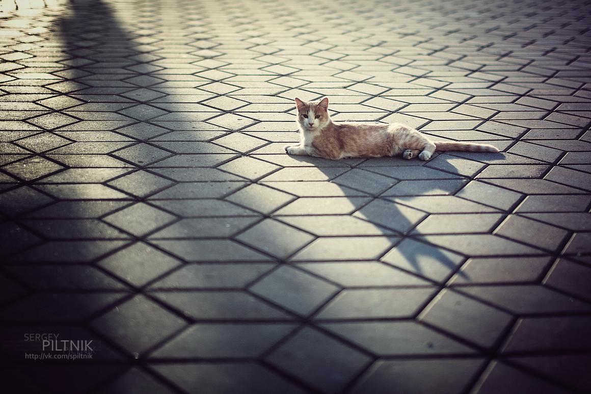 каждый кот в душе - египетский сфинкс - Сергей Пилтник