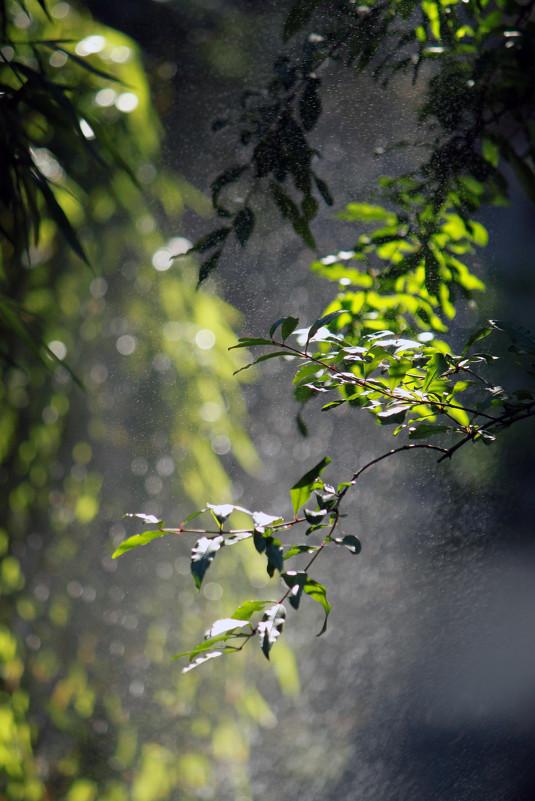Трава, вода, солнце - Наталья Тырданова