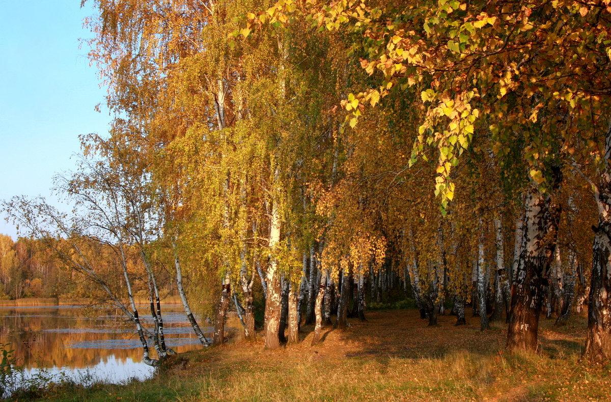 Осенние прогулки в сентябре... - Нэля Лысенко