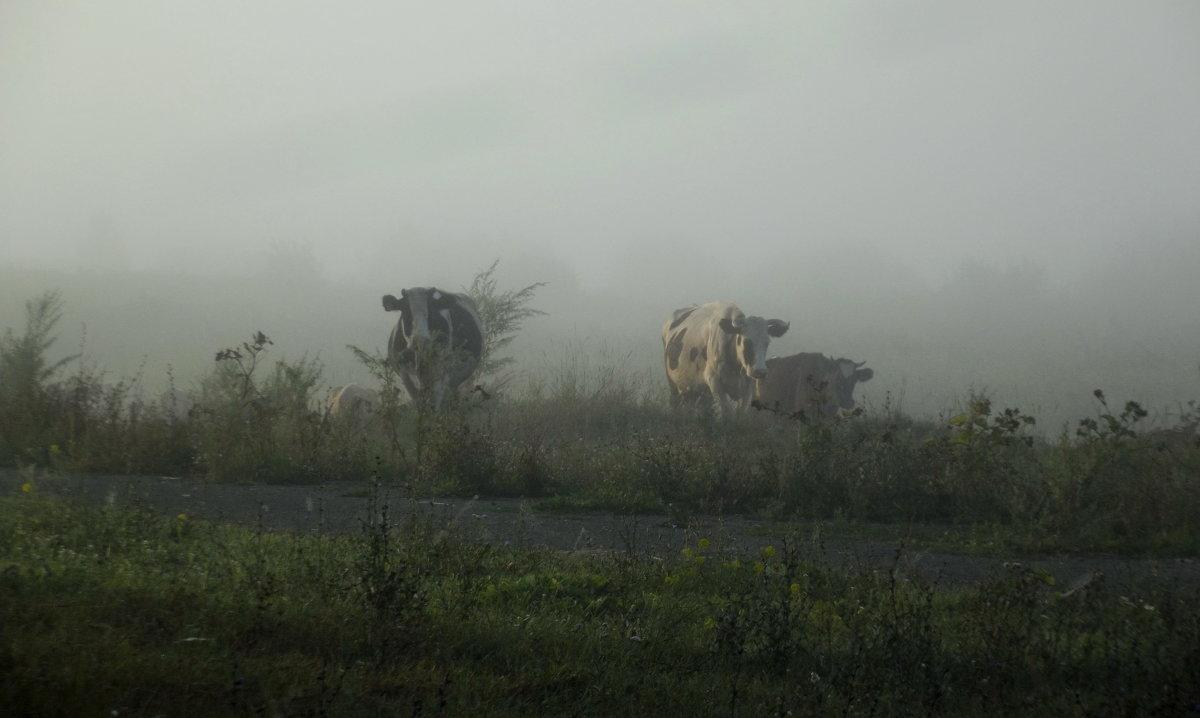 Выплывают из тумана - Светлана Рябова-Шатунова
