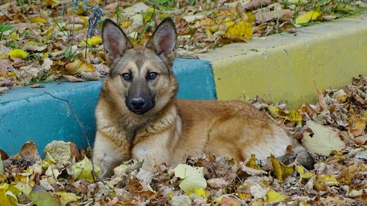 Умный взгляд бездомной собаки - Милешкин Владимир Алексеевич