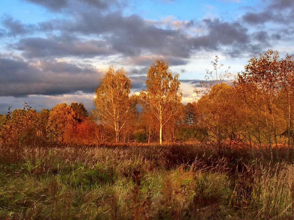 Яркое  солнце осени - Лара Симонова