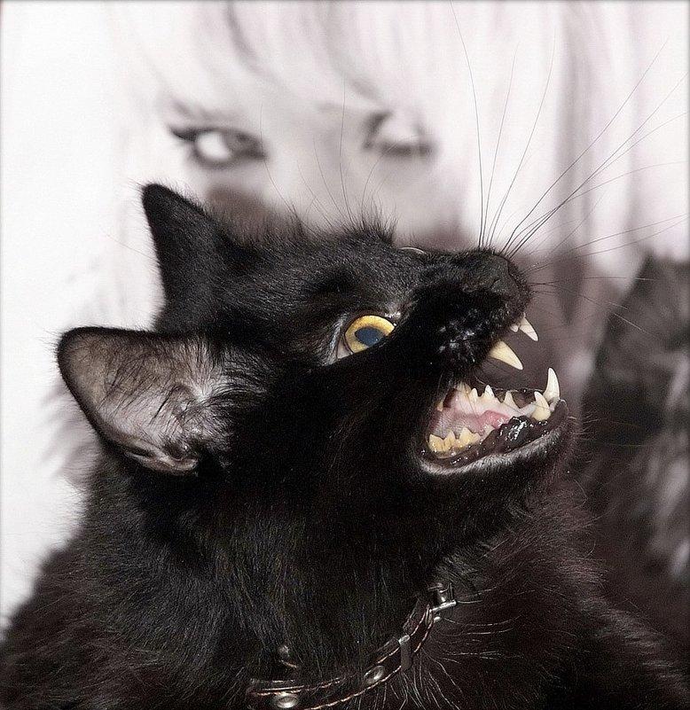 Мой хороший котик.. Он так зевает.))))) - ИгорьОк Бородин