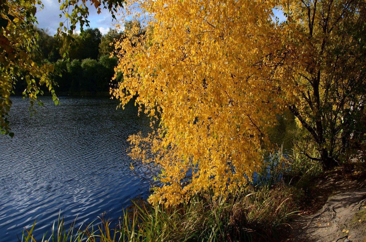 Осенью блеснёт красой берёзка над водой пруда осенней, синей!