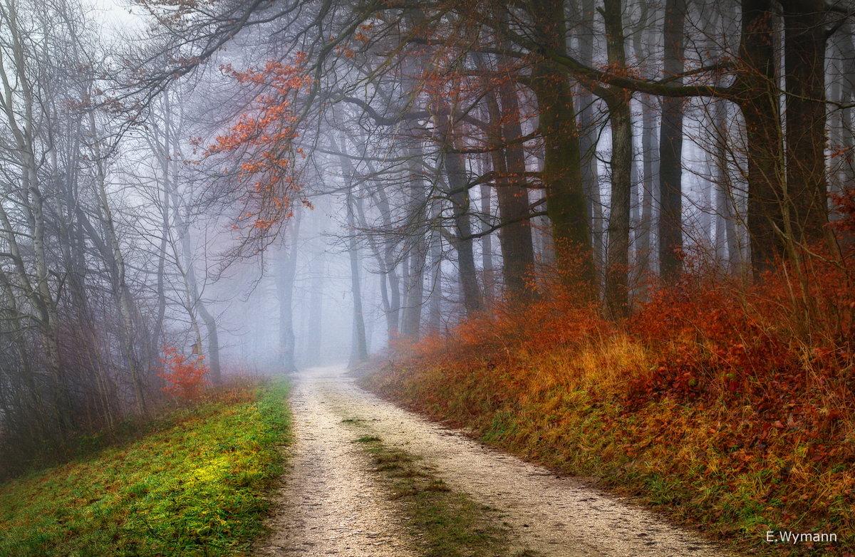 в лес сказочный опять пойду гулять - Elena Wymann