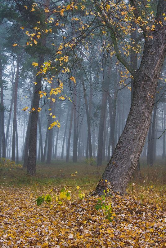 Туманное утро - Александр Крупский