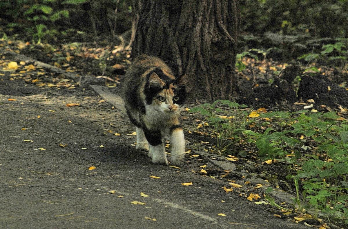 Кошка - Vit