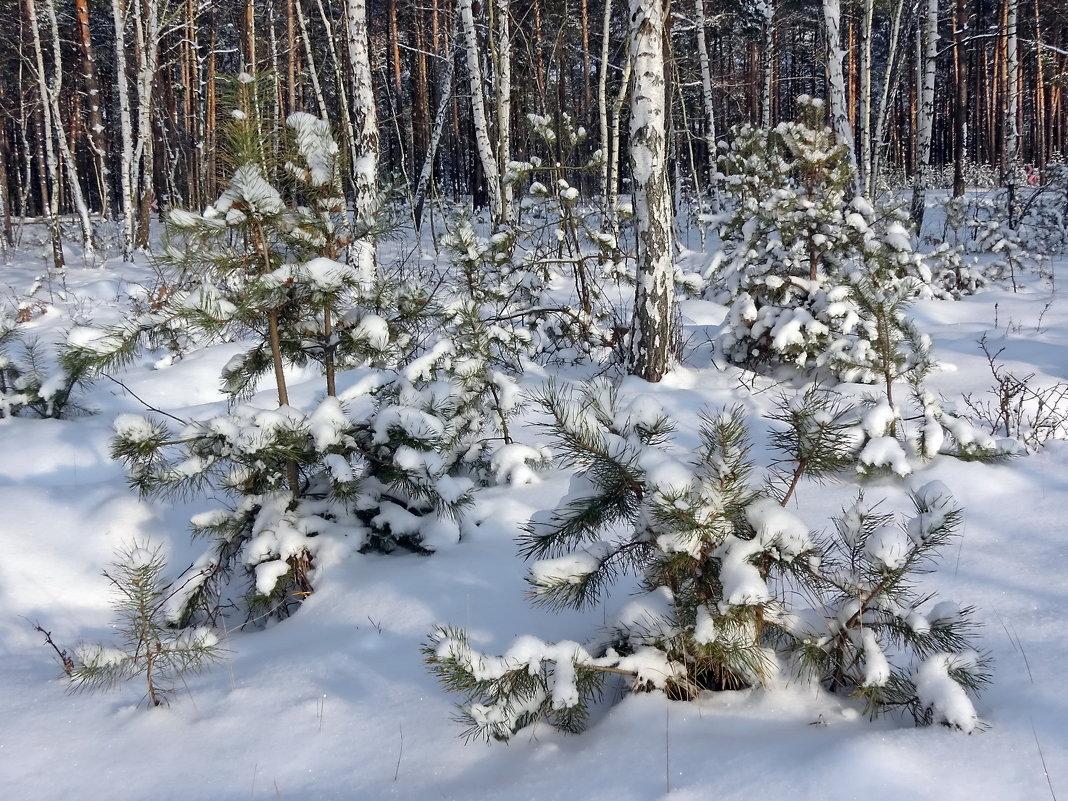 Маленьким сосенкам не холодно зимой - Liliya Kharlamova