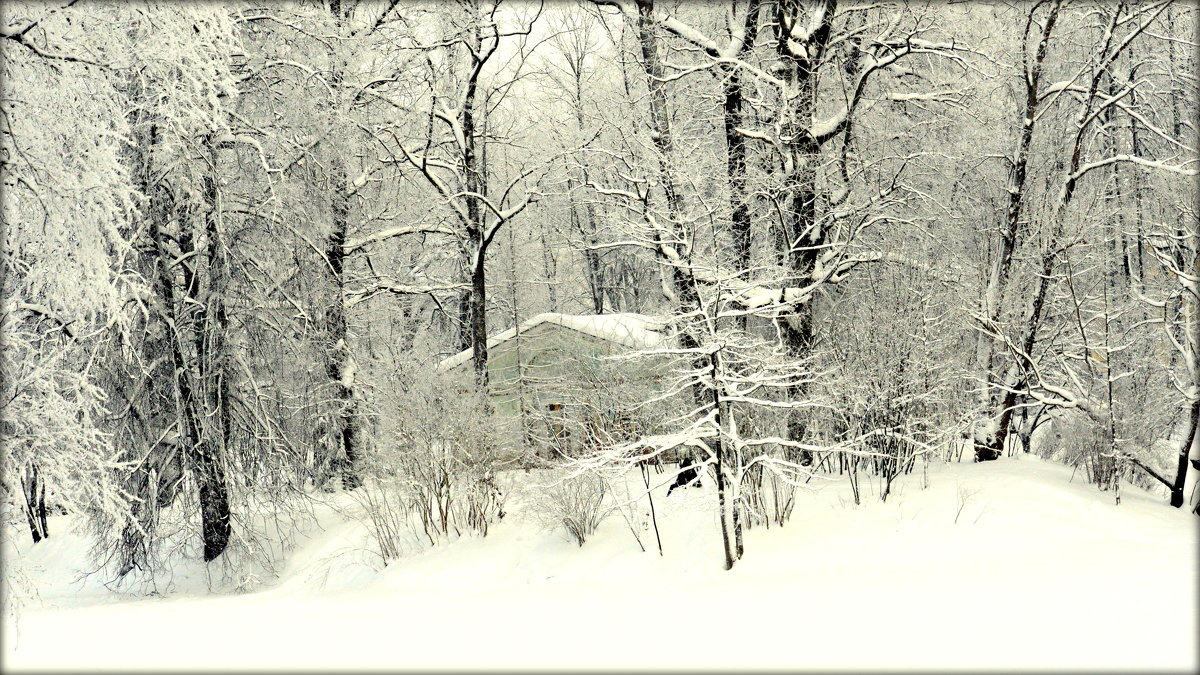 Зимой в Александровском парке  4 - Сергей
