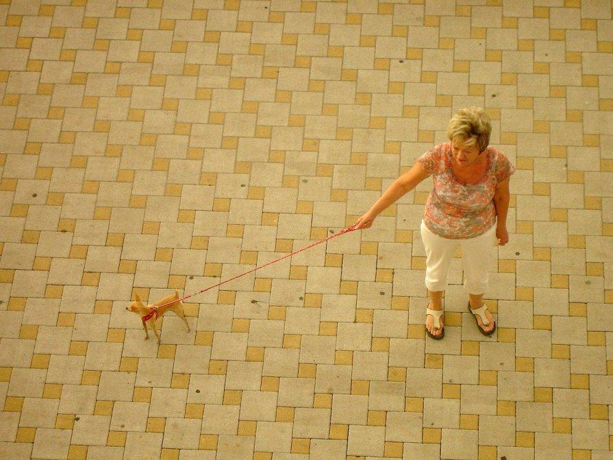 Дама с собачкой - Юлия Годовникова