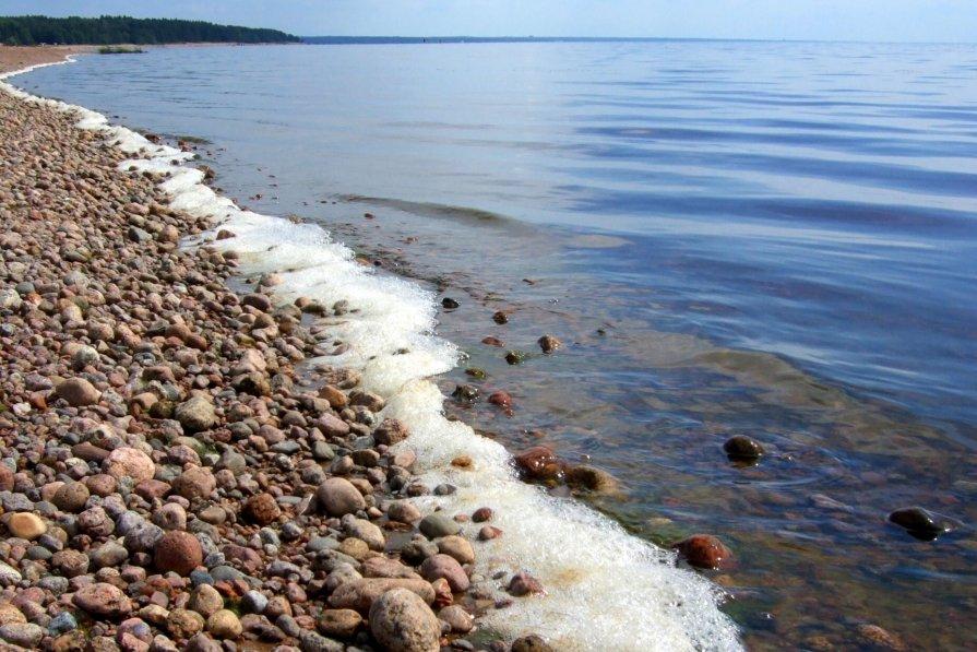 побережье Финского залива - Алексей Кудрявцев