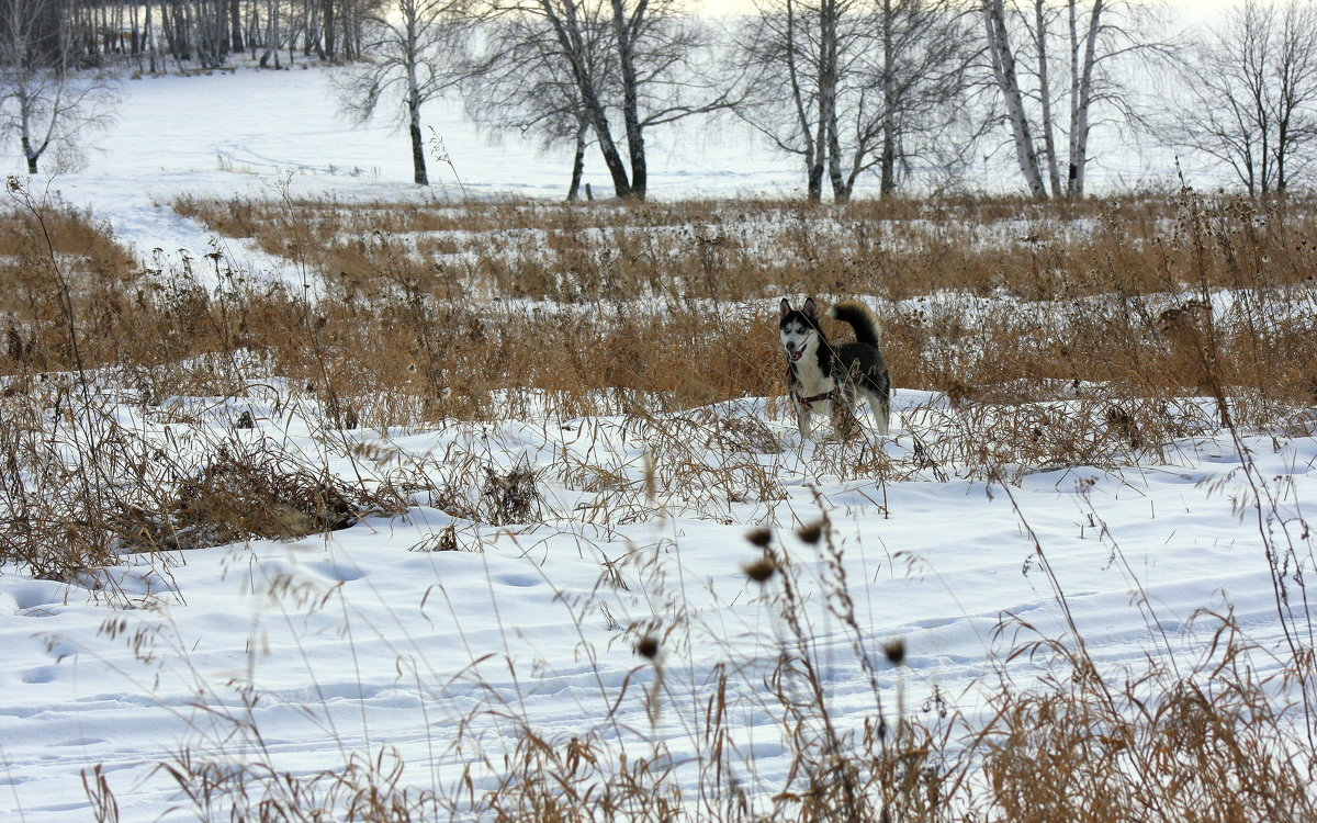 Зимние прогулки...
