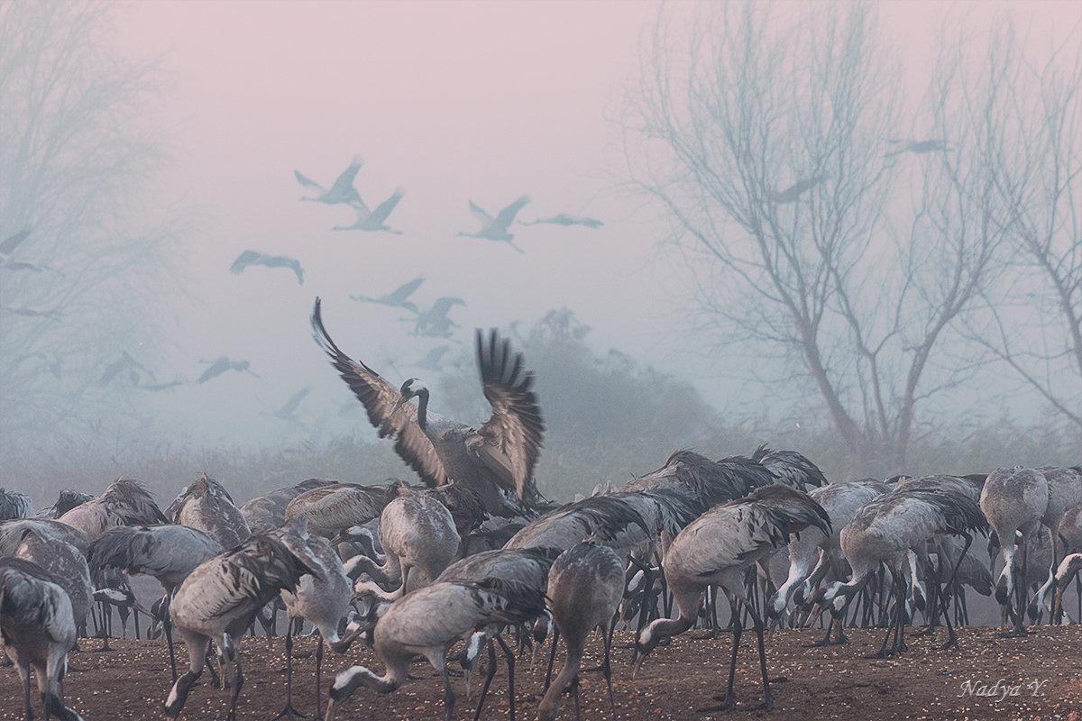 Перелетные птицы - Nadin