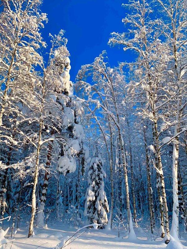 Зимний лес - Алексей Сергеев