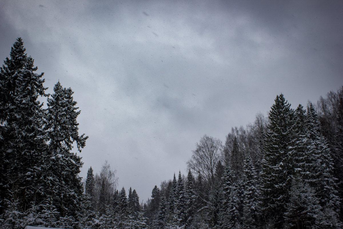 Зимний лес - Александр Гладких
