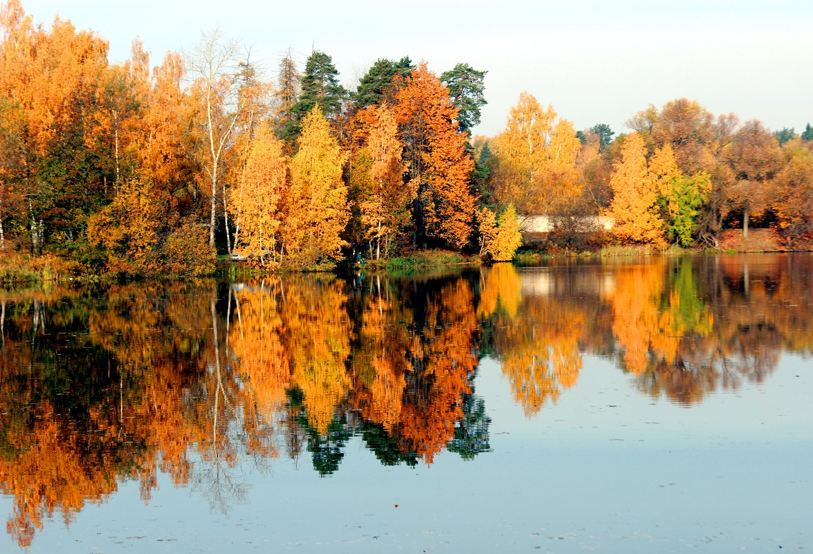золотая осень - Дмитрий Солоненко