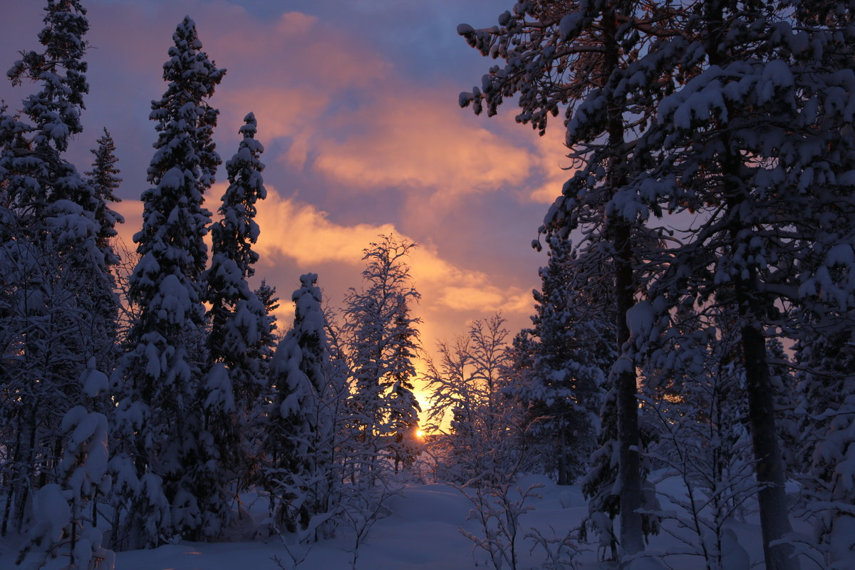 Лесные сказки - Ольга