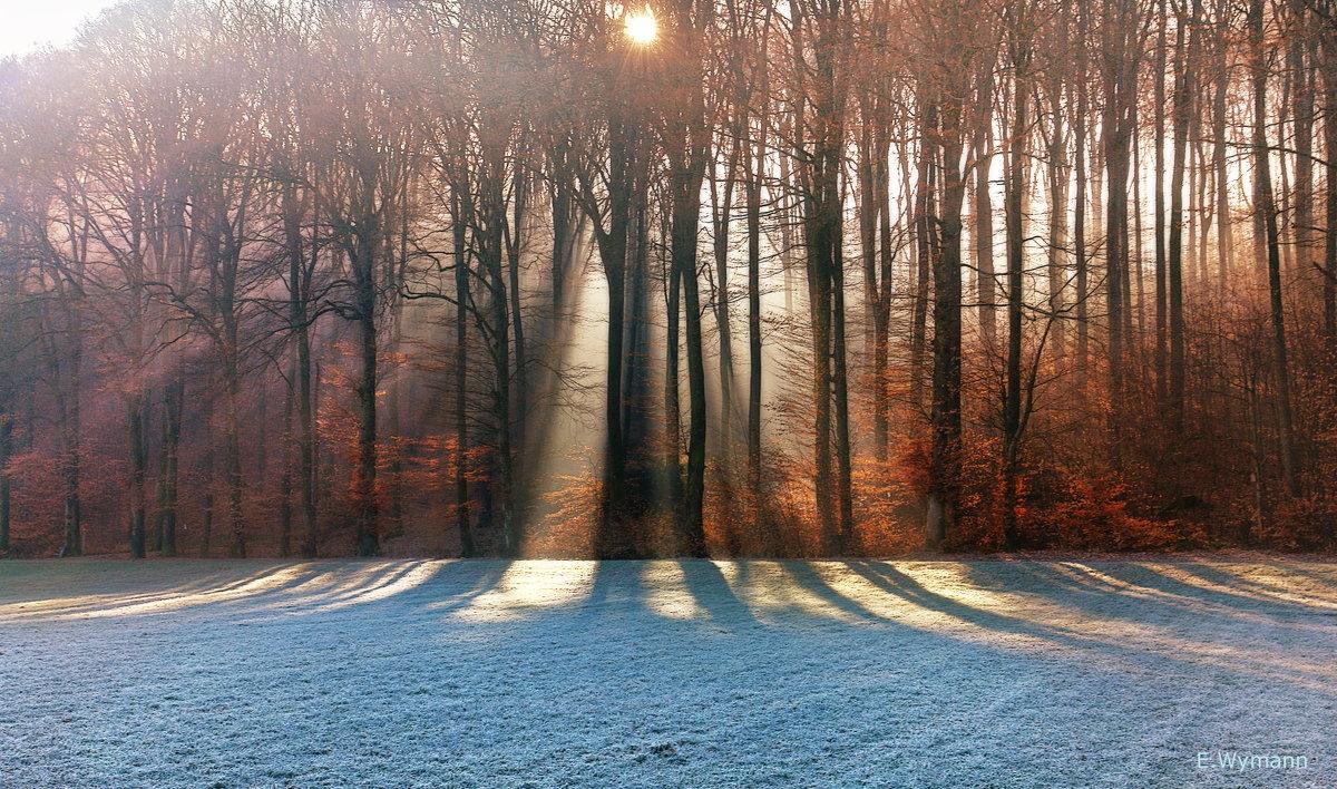 февральское утро - Elena Wymann