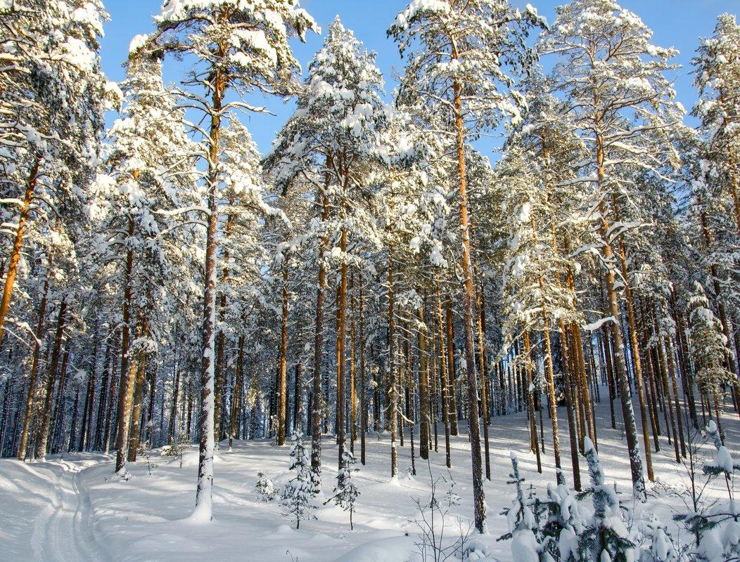 зима - shperl