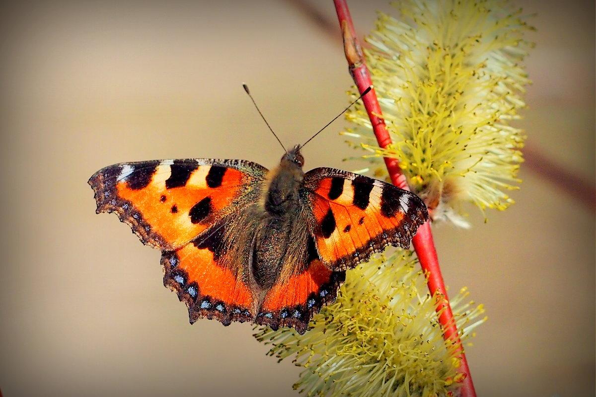опять бабочки...5 - Александр Прокудин
