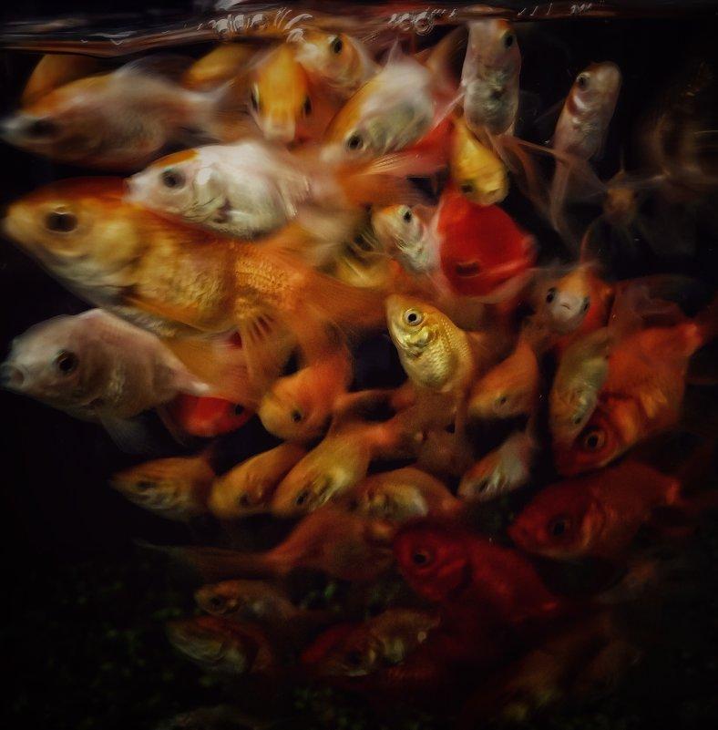 Между прочим, помнишь лучше всего тех рыб, которых не поймал - МАК©ИМ Пылаев-Пшеничников