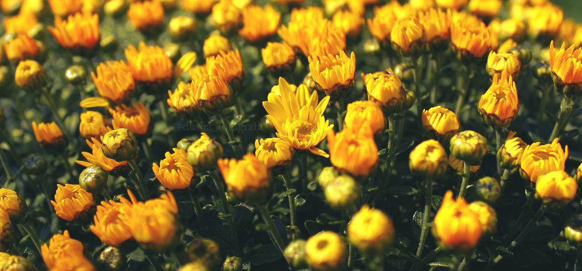 Цветы - Лилия Кондратьева