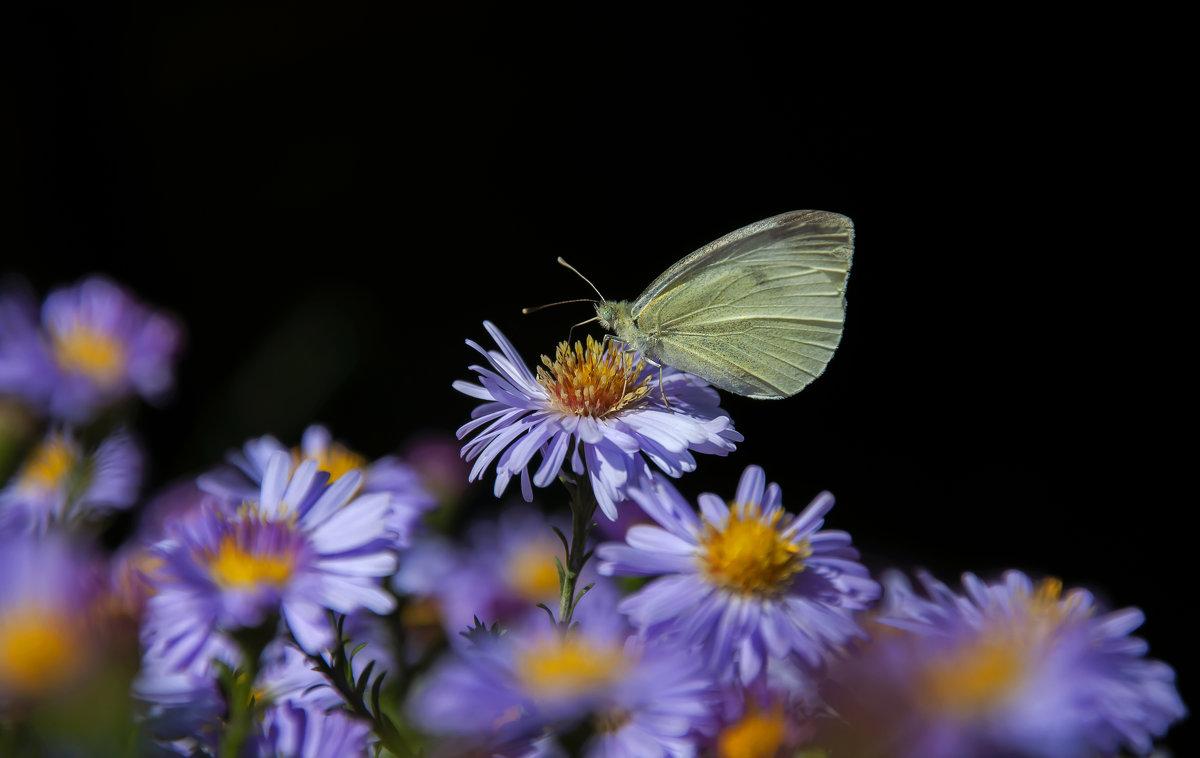 Бабочка уходящего лета - Наталья Димова