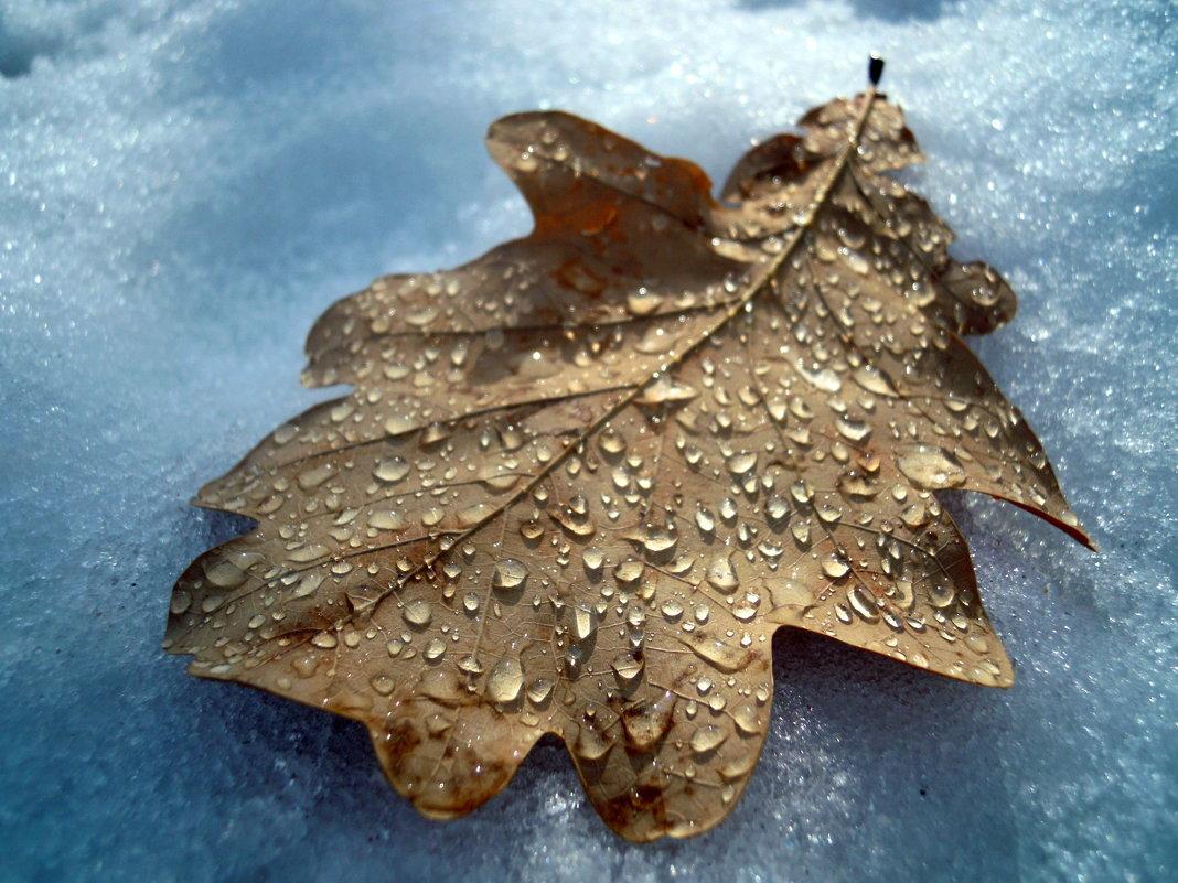 И от дыхания весны осенний лист оттаял.... - Анна Суханова