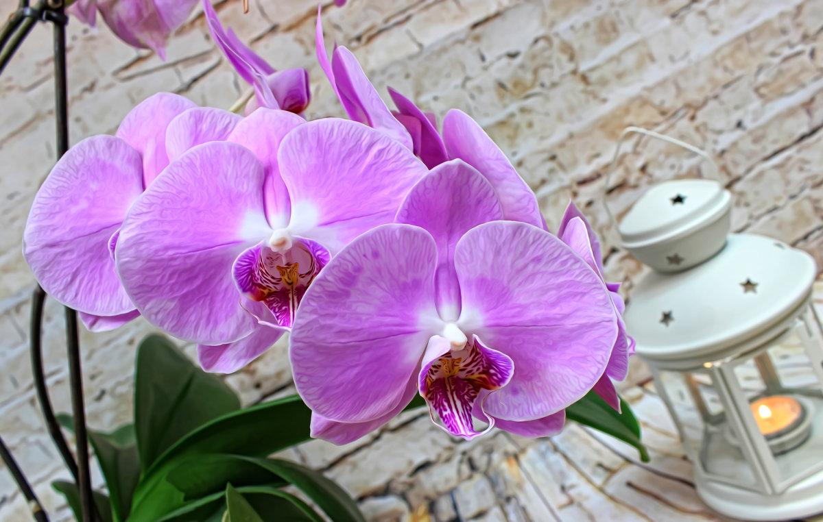 Орхидейное - Наталья Стальмакова
