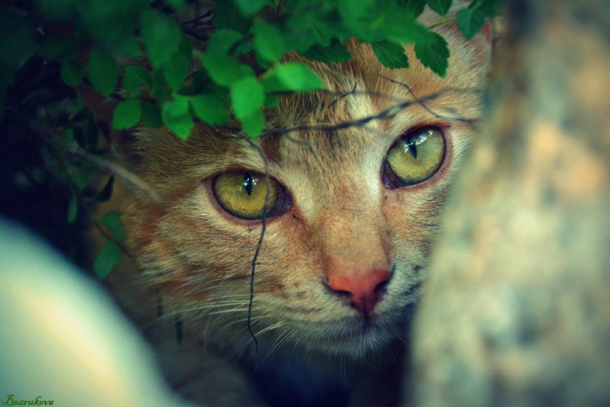 кошачьи глаза - Ксения Комина